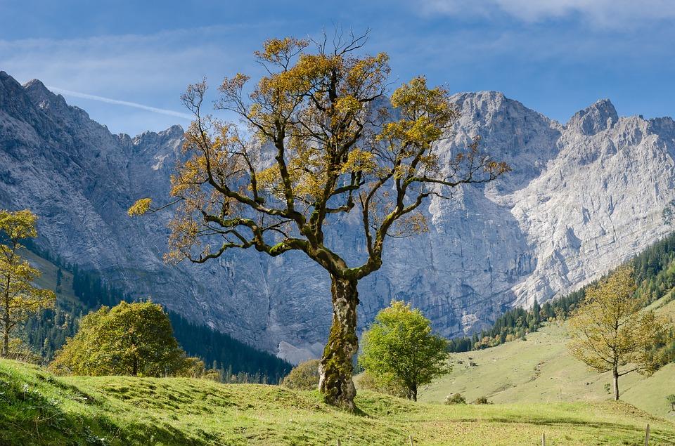 arbre paysage montagne